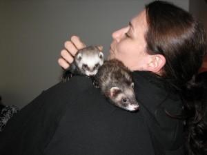 Silver ferret club 2010 08