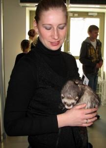 Silver ferret club 2010 12