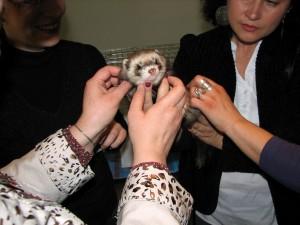 Silver ferret club 2010 13