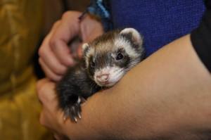 ZooEkspo 2011 029